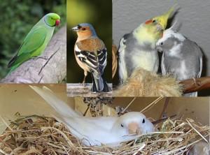 Birds01