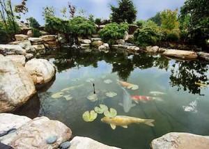 Garden_pond01