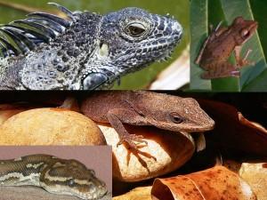 Reptiles01